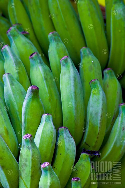 Bunch of green bananas at Waimea botanical gardens