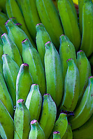 Bunch of green bananas at Waimea botanical gardens