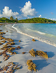 Vieques Island, Puerto Rico<br /> Seaweed on the white sand of Playa Plata or Orchid Beach. on the island of Vieques