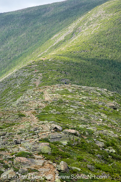 Hikers make their way along the Bondcliff Trail towards Mount Bond during the summer months. Located in the White Mountains of New Hampshire.