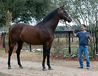 Star Guitar, Louisiana Horse of the Year