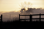 Farm Gate Silhouette against Misty Sunrise