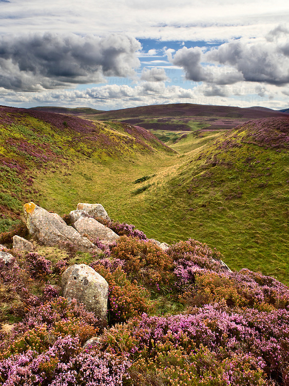 Rocky Outcrop and Valley in Heather Moorland below Gains Law near Wooler Northumberland National Park England