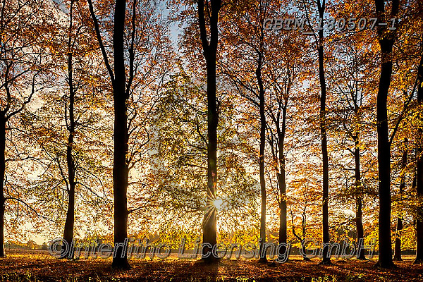 Tom Mackie, LANDSCAPES, LANDSCHAFTEN, PAISAJES, photos,+Britain, British, East Anglia, England, English, Europe, European, Great Britain, Norfolk, Thetford, Tom Mackie, UK, atmosphe+re, atmospheric, autumn, autumnal, back-lit, backlight, backlit, beech, color, colorful, colour, colourful, contre-jour, deci+duous, dramatic outdoors, environment, environmental, fagus, fall, forest, gold, golden, horizontal, horizontals, inspiration+, inspirational, inspire, landscape, landscapes, leaves, light, mood, moody, scenery, sceni,Britain, British, East Anglia, En+,GBTM180507-1,#l#, EVERYDAY