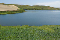 Abbotts Lagoon, Point Reyes National Seashore, California