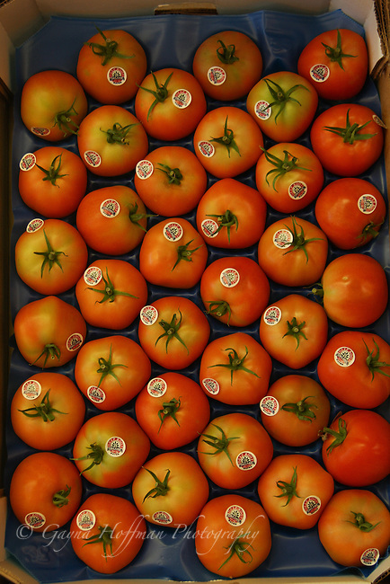 Box of dozens of tomatoes. Overview.