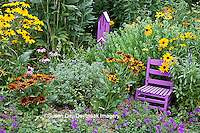 63821-207.16  Purple chair and Butterflyhouse in garden with Homestead Purple Verbena (Verbena canadensis), Blue Victoria Salvia (Salvia farinacea), Autumn Colors Black-eyed Susans (Rudbeckia hirta) and Indian Summer Black-eyed Susans, Purple Coneflowers (Echinacea purpurea), Autumn Joy Sedum, Marion Co. IL