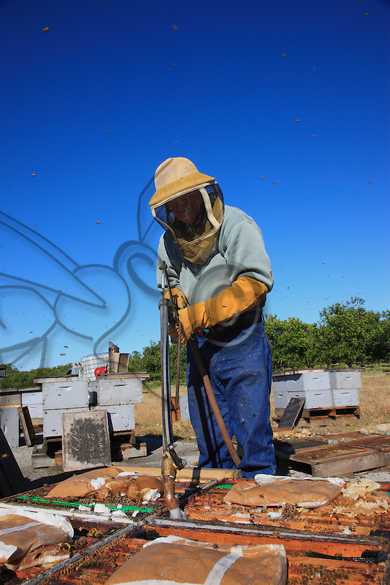Before departure, the hives are fitted out with water supplies to allow the bees to survive during the three-day trip. Sugar as well as pollen (proteins) is also placed in the hives.