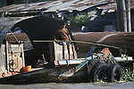 A boy uses a pole net to pull floating trash from a klong. People live on the klongs, boulevards of water that flow through the city like open veins,  and spend their lifetimes living in houseboats in Bangkok, Thailand. (Jim Bryant Photo)....