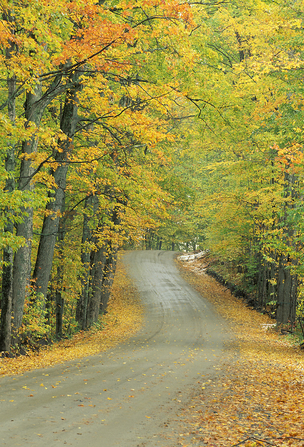 Road through autumn foliage, Craftsbury, Vermont