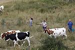 Foto: VidiPhoto<br /> <br /> RANDWIJK – Dubbel droog in de uiterwaarden bij het Gelderse Randwijk maandag. De biologische melkveehouders Arnoud Vrugteman en Franka Tomassen verhuizen hun 'droge' koeien en pinken vanwege de droogte. De drie kinderen konden op hun eerste vakantiedag direct aan de slag. Doordat er de afgelopen weken nauwelijks regen is gevallen, is het gras op deze plek in de Schoutenwaard bij Randwijk vrijwel kaalgevreten. Omdat beregenen van grasland voor melkveehouders vaak te duur is, begint de droogte in de sector opnieuw een rol te spelen. De droge (zes weken voor het afkalven) koeien van het Randwijkse agrarische bedrijf gaan naar de boerderij en de pinken verkassen naar een andere plek in de uiterwaarden. De maatschap Tomassen-Vrugteman telt 60 biologische melkkoeien.