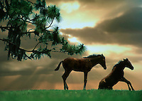 Two foals - one standing, one sitting - on rise, with dramatic sky.