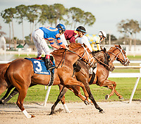 TAMPA, FL - February 10: The trifecta for the Sam F Davis Stakes (Grade III) at Tampa Bay Downs on February 10, 2018 in Tampa, FL. (Photo by Carson Dennis/Eclipse Sportswire/Getty Images.)