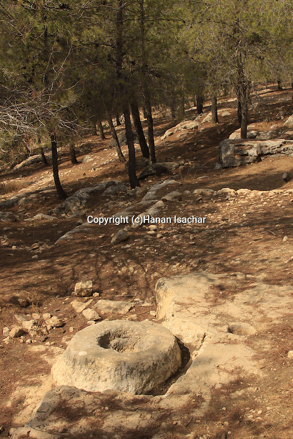 Israel, Southern Hebron Mountain, ancient agricultural devices in Yatir forest