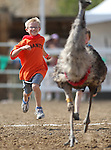 Cameron Miller, 10, competes in the emu event at the International Camel Races in Virginia City, Nev., on Friday, Sept. 9, 2011. .Photo by Cathleen Allison