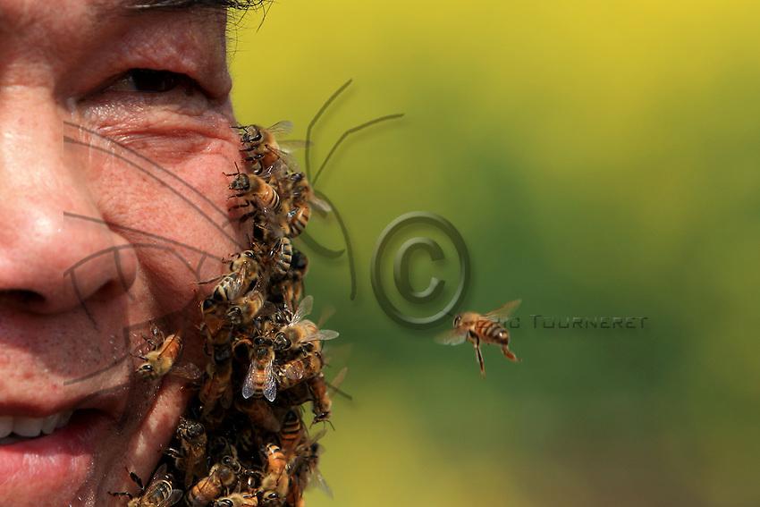 La barbe d'abeilles demande un sang-froid à toute épreuve.///The beard of bees requires unfaltering sang-froid.