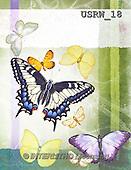 Randy, STILL LIFE STILLLEBEN, NATURALEZA MORTA, paintings+++++Butterflies-1,USRW18,#i# butterfly