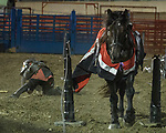 The Warren County Fair grandstand got very medieval July 27 when the nationally-known Knights of Valour performed a jousting tournament for a nearly packed house.