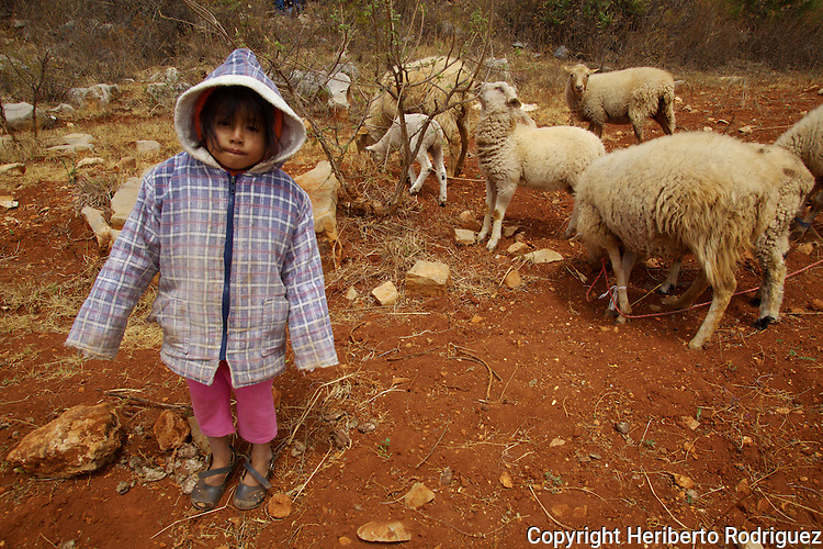 A little girl takes care of her sheep in the village of Montenegro in the Nochixtlan highlands, March 2, 2013. Photo by Heriberto Rodriguez