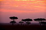 AFRICA  2017