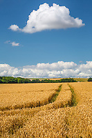 Wheat is a primary crop of the Cotswald area of England.  Much of it finds its way into local beers.