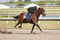 #102.Fasig-Tipton Florida Sale,Under Tack Show. Palm Meadows Florida 03-23-2012 Arron Haggart/Eclipse Sportswire.
