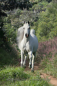 Bob, ANIMALS, collage, horses, photos(GBLA681,#A#) Pferde, caballos