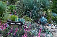 Deserts of America New World Desert Garden section of University of California Berkeley Botanic Garden