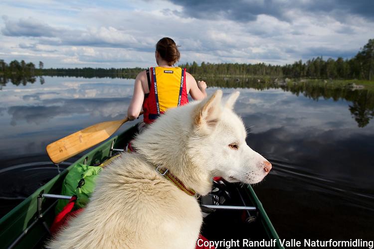 Jente og grønlandshund i kano. ----- Girl and dog in canoe.