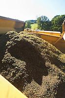 Moisson de ble noir, ou sarrazin, chez Dominique JOUVE