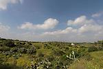 Israel, Shephelah region. Scenery near Agur by route 353