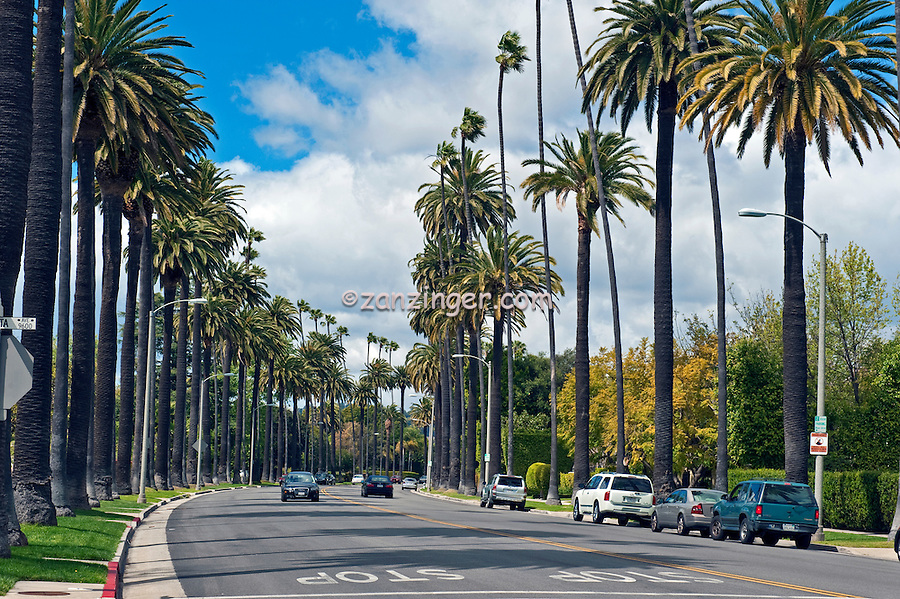 Palm Trees line residential street in Beverly Hills California