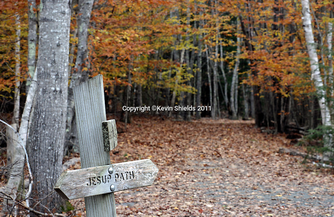 Jesup Path in the Fall, Acadia National Park, Maine, USA