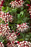 Bunches of radishes at food market in Bordeaux region of France