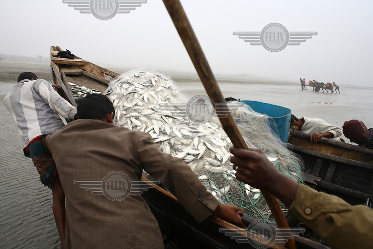 A day's catch for a fisherman in Kuakata beach in Patuakhali. Dried fish is a popular Bengali food, and 50,000 men are employed in the industry in the coastal areas. Around 300 tonnes of dry fish is produced each season, which runs from November to April.