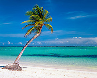 Dominikanische Republik, Punta Cana, Bavaro Beach: einzelne Palme am leeren Strand | Dominican Republic, Punta Cana, Bavaro Beach: single palm tree at secluded beach
