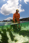 A farmer tends to his seaweed patch, Nusa Lembongan, Bali, Indonesia, Pacific Ocean, No MR