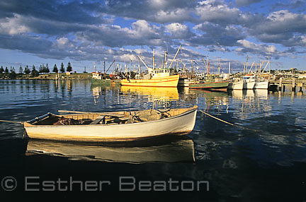 Fishing boats in harbour, Bermagui, New South Wales