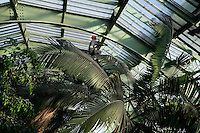 Tropical Rainforest Glasshouse (formerly Le Jardin d'Hiver or Winter Gardens), 1936, René Berger, Jardin des Plantes, Museum National d'Histoire Naturelle, Paris, France. General view of a worker, lit by the afternoon light, high up in the metal structure of the roof of the Art Deco style glasshouse, installing an atomiser to ensure that the atmosphere has the correct humidity for the luxuriant tropical foliage.