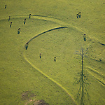 Horses grazing in the early morning Sumpter South Carolina heilcopter aerial