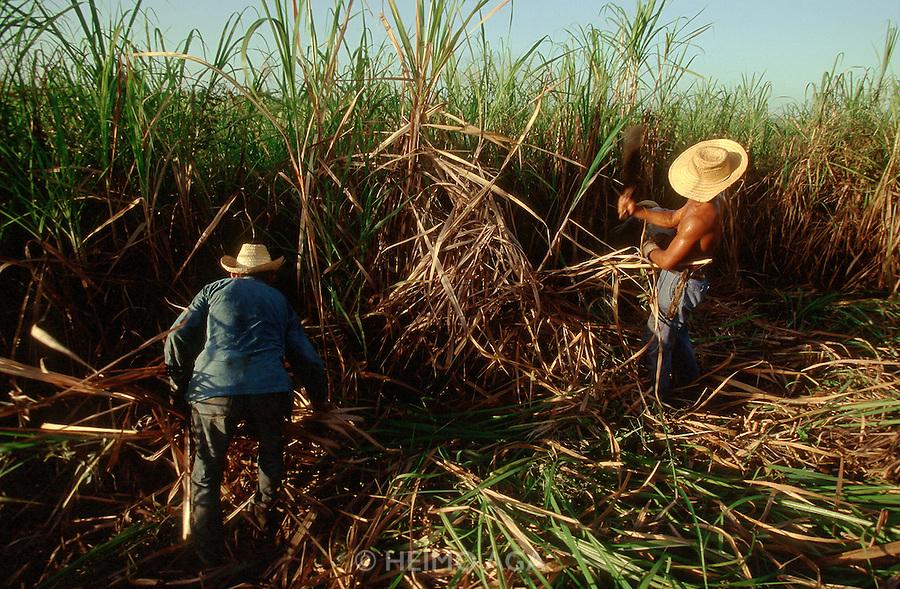 CUBA, MARIEL..The Zafra (sugar cane harvest)..(Photo by Heimo Aga)