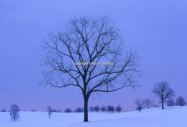 Tree in Winter, Valley Forge National Historical Park, Pennsylvania. This area, the Grand Parade, was used to train the Continental Army during the encampment of 1777-78, under General George Washington.