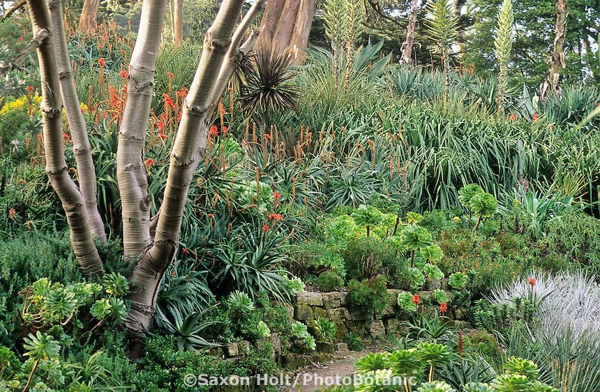 Holt 286 Photobotanic Stock Photography Garden