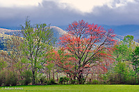 Early spring foliage, Cades Cove, Great Smoky Mountains National Park, Tennessee