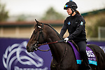 DEL MAR, CA - OCTOBER 31:  My Boy Jack, owned by Don't Tell My Wife Stables & Monomoy Stables LLC and trained by J. Keith Desormeaux, exercises in preparation for Breeders' Cup Juvenile Turf at Del Mar Thoroughbred Club on October 31, 2017 in Del Mar, California. (Photo by Alex Evers/Eclipse Sportswire/Breeders Cup)