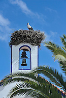 Storks nest on the bell tower of the church in the local village to CasasNaAreia