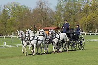 Four-in-Hand white Kladruby Horses in the yearly international Horse Carriage competition at the stud farm Kladruby, in the Czech Republic, Europe