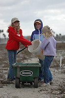 Mariner's Point, San Diego, CA, USA.  Saturday, December 13, 2008:  Kids Korps Volunteers from Point Loma's Explorer Elementary School; Sydney Fortune (2nd Grade), Ciara Gray (3rd Grade) and Shelby Fortune (K) work with the San Diego Audubon Society to clean up one of the last Least Tern nesting sites on Mission Bay.