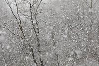 Schneefall, Schneeschauer, Schneegestöber, Winter, Schnee, Winterlandschaft, Winterstimmung, winterlich, eisig, kalt, snow