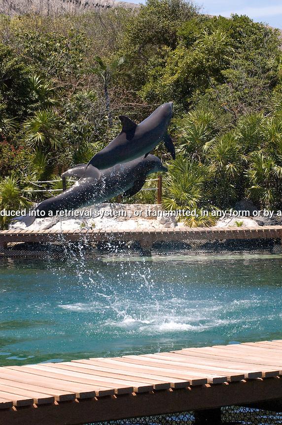 Dolphins jumping at Xel-Ha Mexico